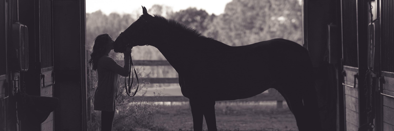 Lån penge til hest